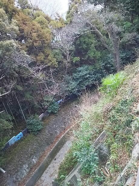 さわやかウォーキング in 浜松