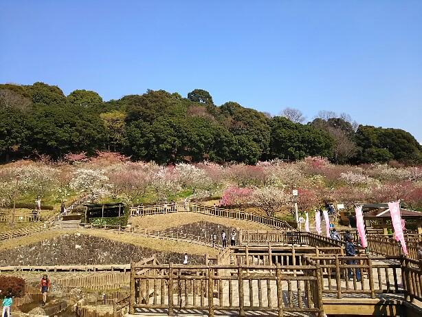 赤塚山公園の梅まつり