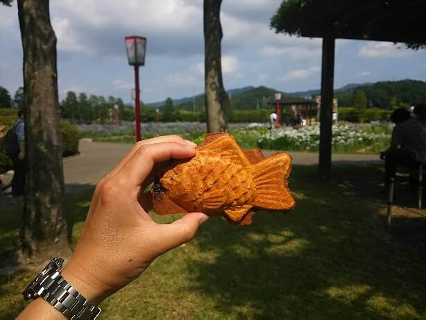 加茂神社しょうぶ祭